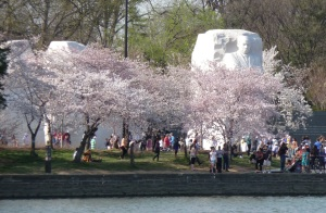 King Memorial and cherry blossoms, April 8, 2013. Photo: Esther Ferington